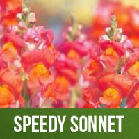 Speedy Sonnet