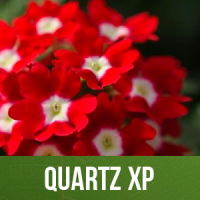 Quartz XP