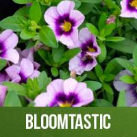 Bloomtastic