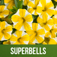 Superbells