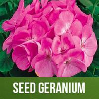 Seed Geranium
