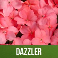 Dazzler