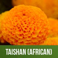 Taishan (African)