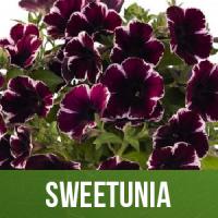 Sweetunia