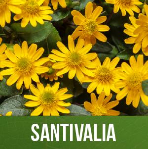 Santivalia