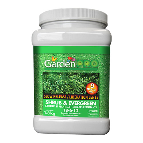 Garden Pro Shrub Evergreen