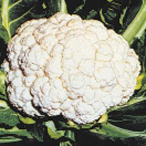 Snow Crown Cauliflower