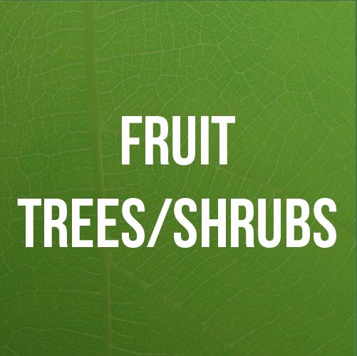 Fruit Trees/Shrubs