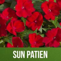 Sun Patien