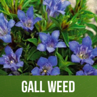 Gall Weed
